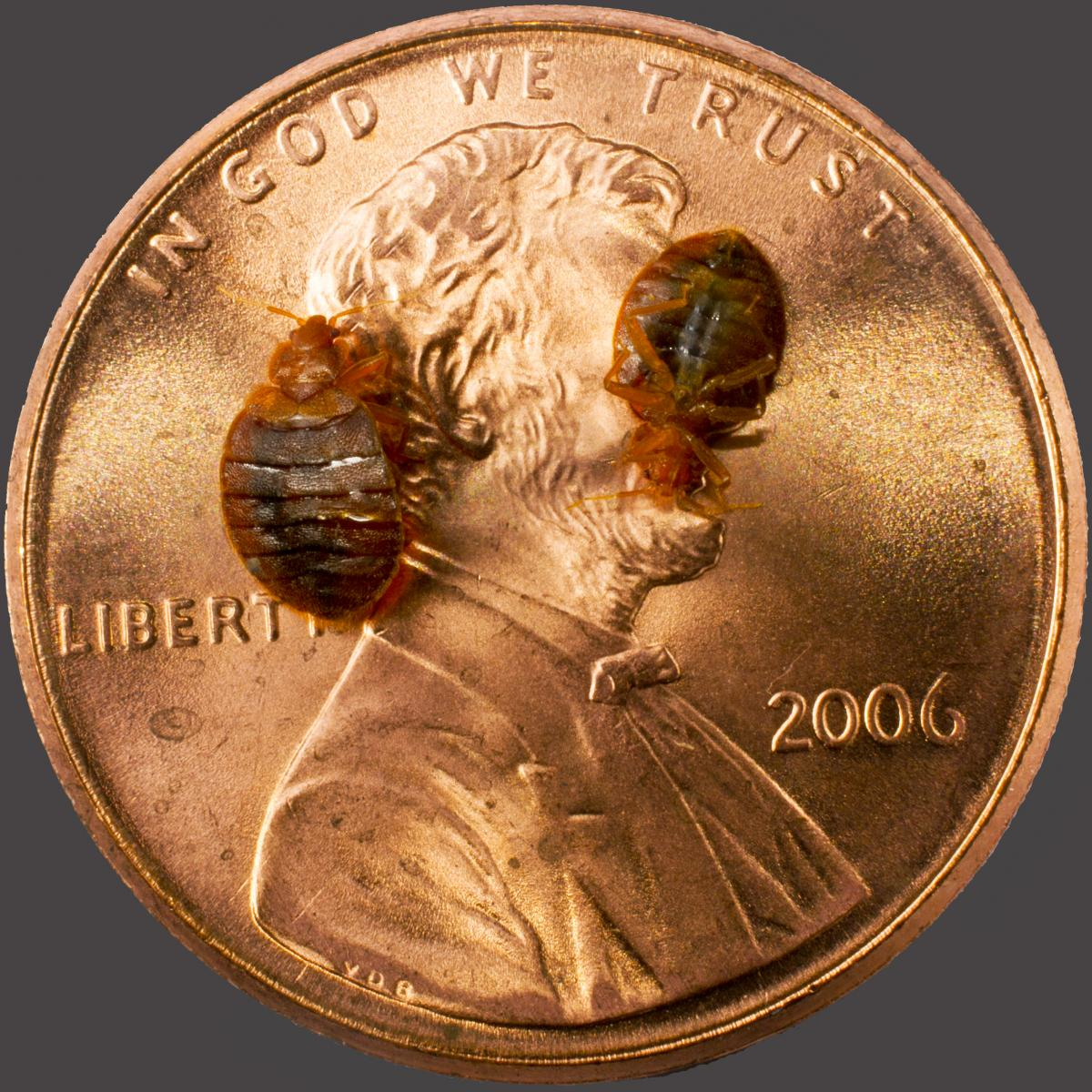bed bugs to scale on penny