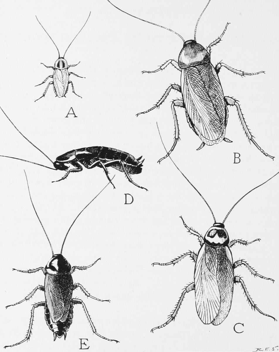 Ways To Get Rid Of Cockroaches From Your North Carolina Home