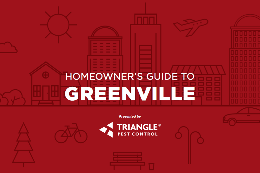 Homeowners guide to greenville triangle pest control greenville sc homeowners guide solutioingenieria Images
