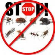 stop pests graphic