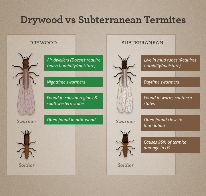 Everything You Need To Know About Termite Swarming Season